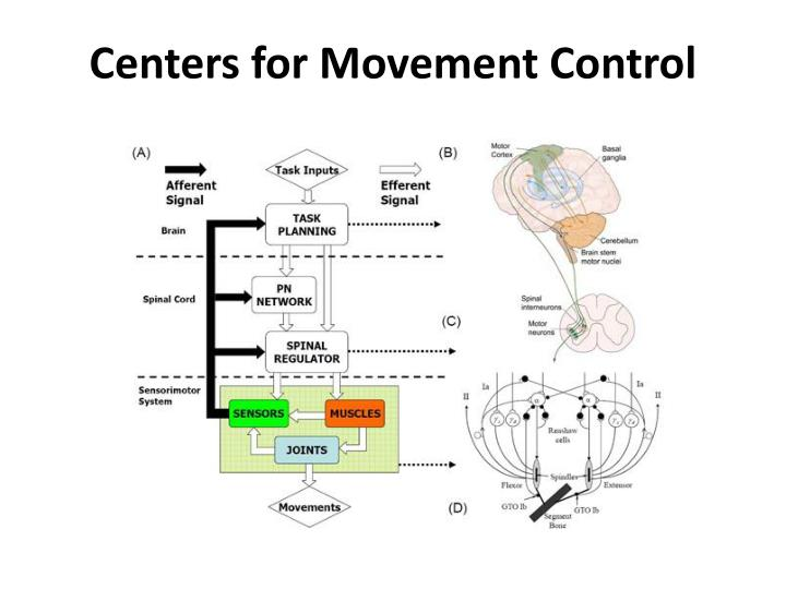 Centers for Movement Control