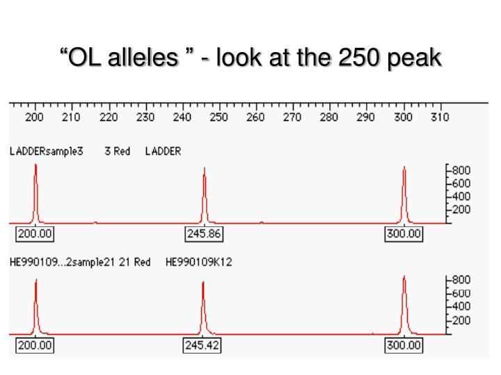 """OL alleles "" - look at the 250 peak"