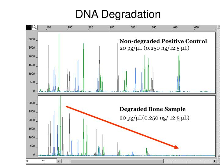 DNA Degradation