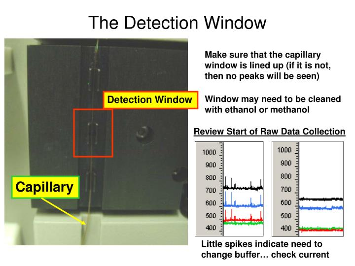 The Detection Window