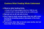 cautions when feeding whole cottonseed