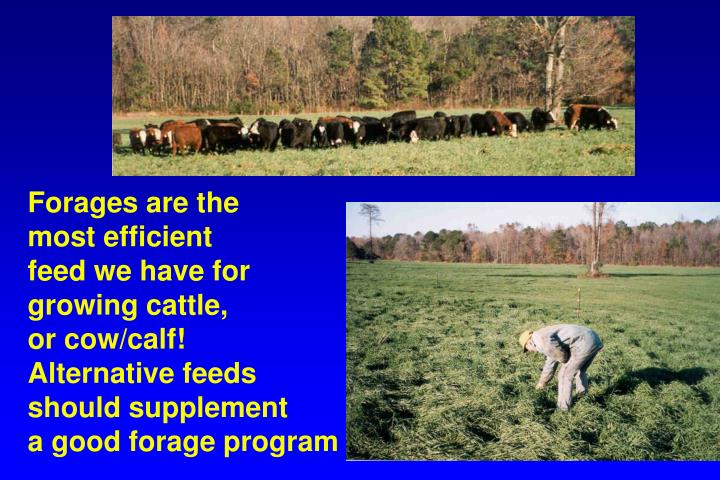 Forages are the