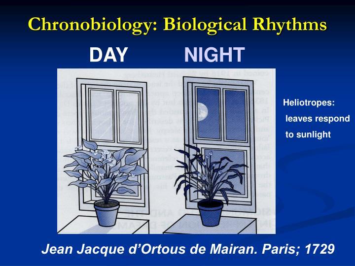 Chronobiology: Biological Rhythms