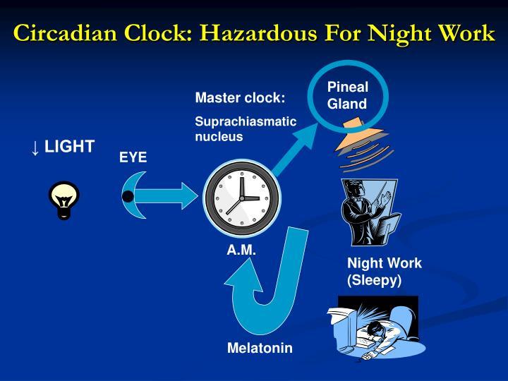 Circadian Clock: Hazardous For Night Work