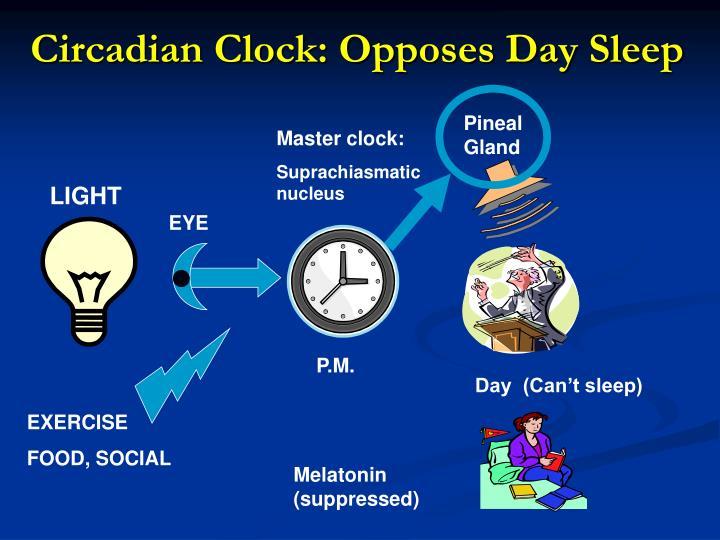 Circadian Clock: Opposes Day Sleep