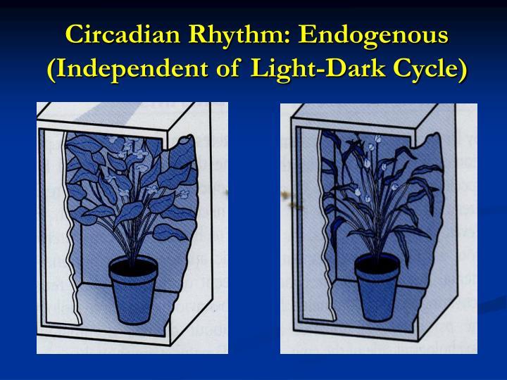 Circadian Rhythm: Endogenous (Independent of Light-Dark Cycle)