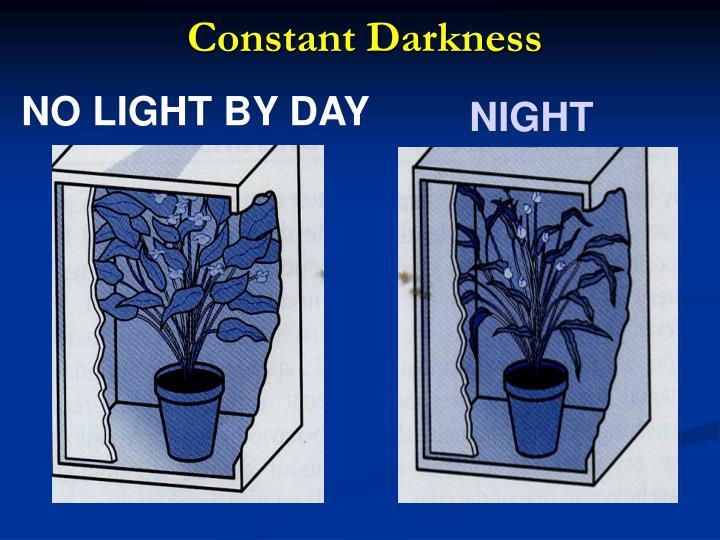 Constant Darkness