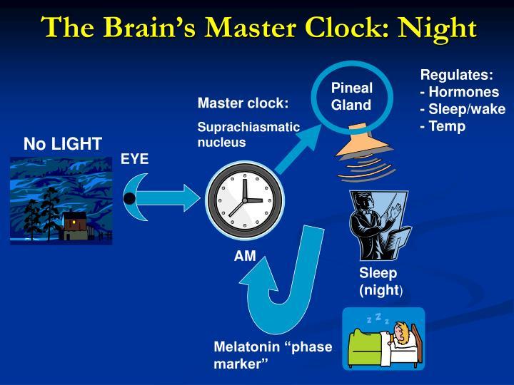 The Brain's Master Clock: Night