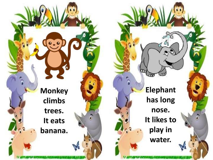 Elephant has long nose.