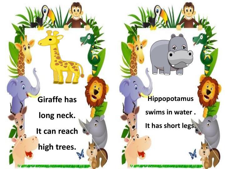 Giraffe has long neck.