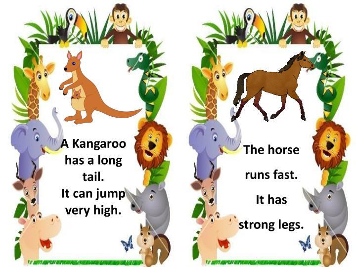 A Kangaroo has a long tail.