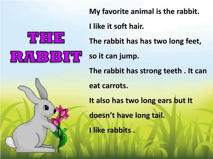 My favorite animal is the rabbit.