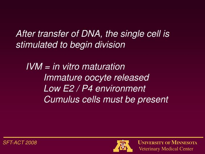 After transfer of DNA, the single cell is