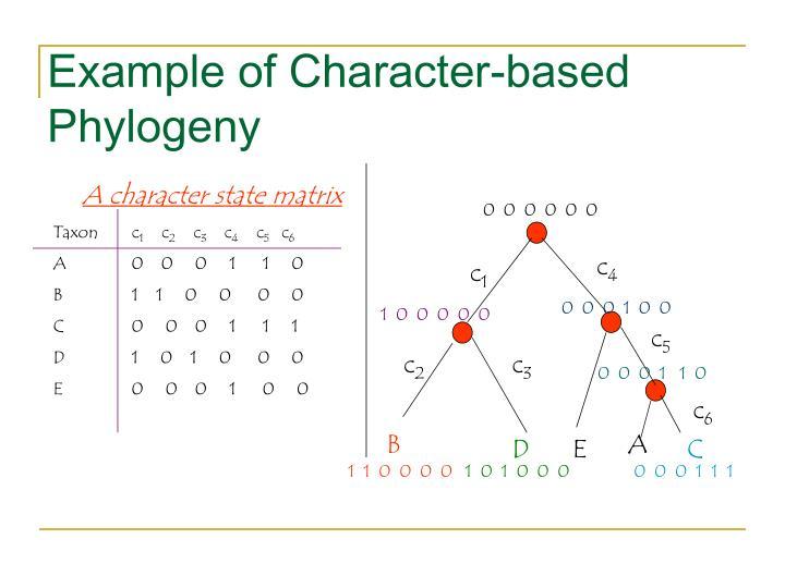 A character state matrix
