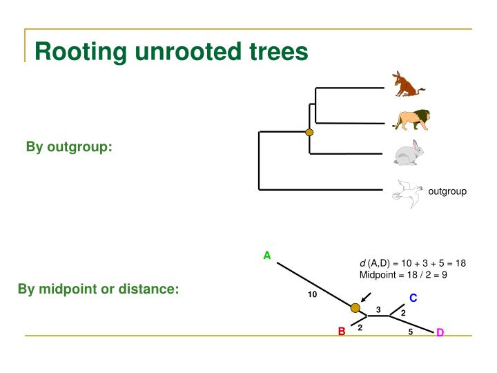 Rooting unrooted trees