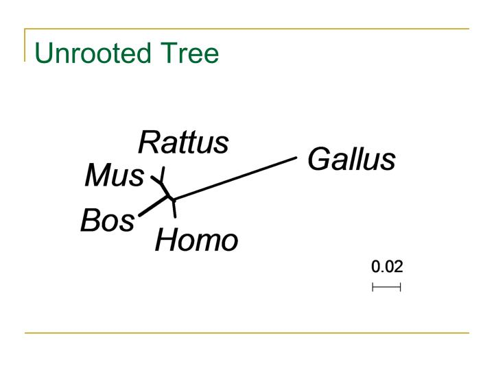 Unrooted Tree