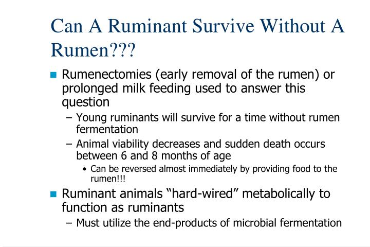 Can A Ruminant Survive Without A Rumen???