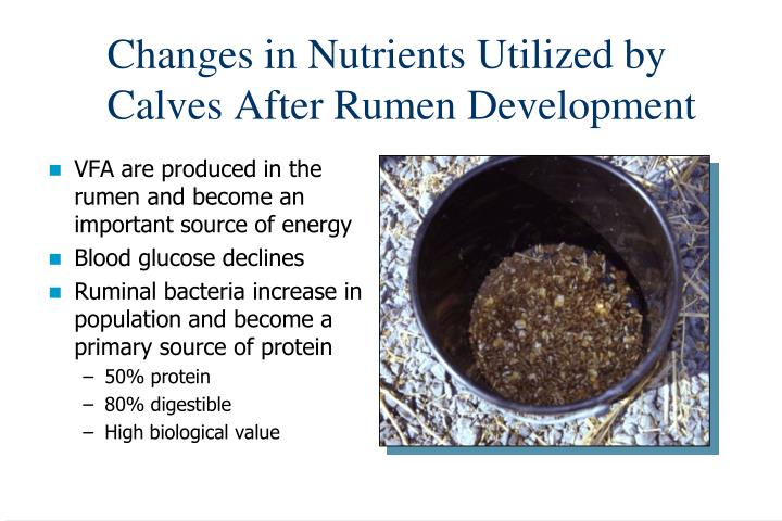 Changes in Nutrients Utilized by Calves After Rumen Development