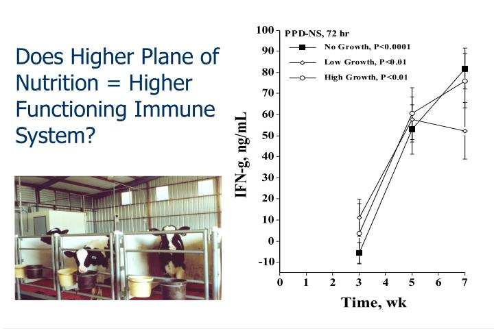 Does Higher Plane of Nutrition = Higher Functioning Immune System?