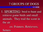 7 groups of dogs