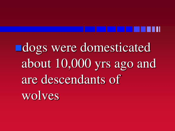 dogs were domesticated about 10,000 yrs ago and are descendants of wolves