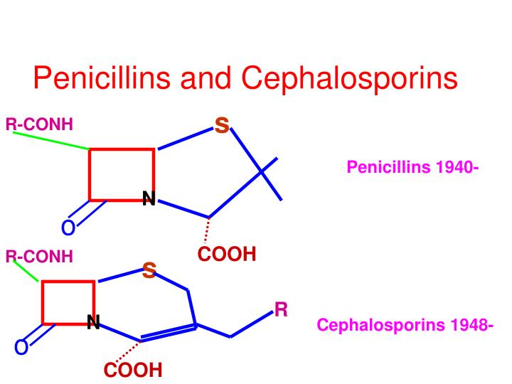 Penicillins and Cephalosporins