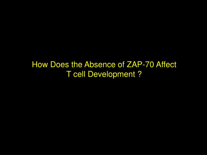 How Does the Absence of ZAP-70 Affect