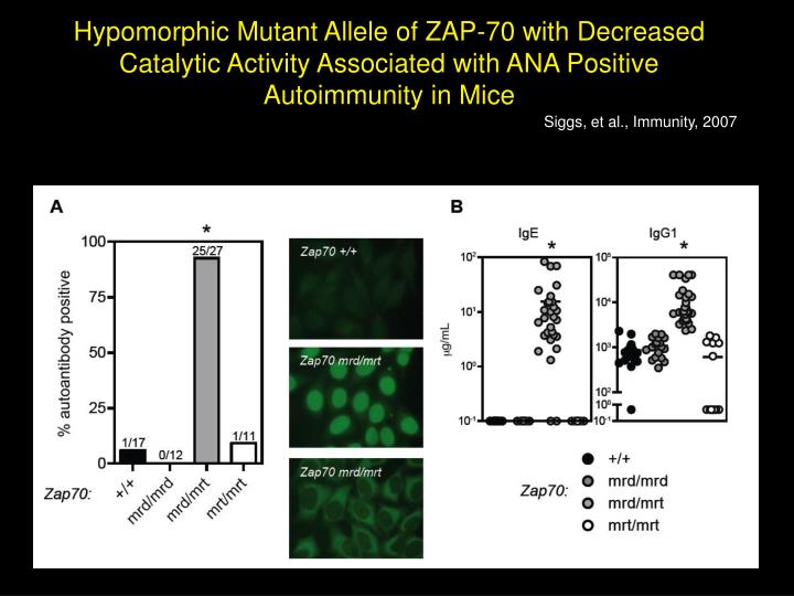 Hypomorphic Mutant Allele of ZAP-70 with Decreased