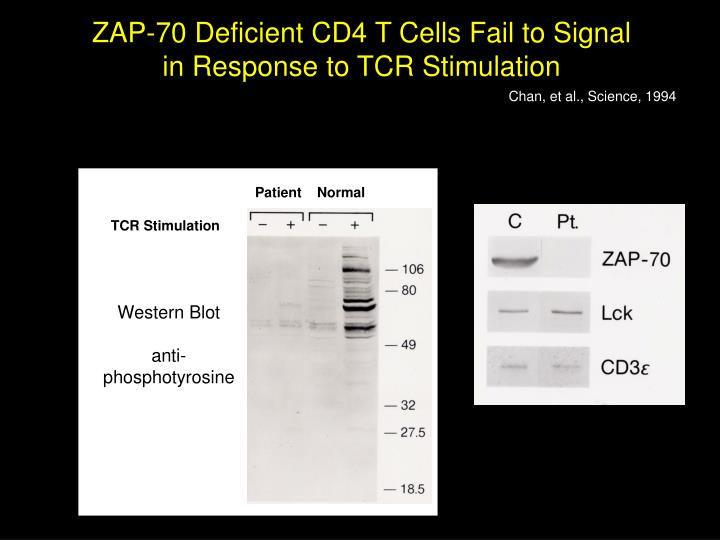 ZAP-70 Deficient CD4 T Cells Fail to Signal