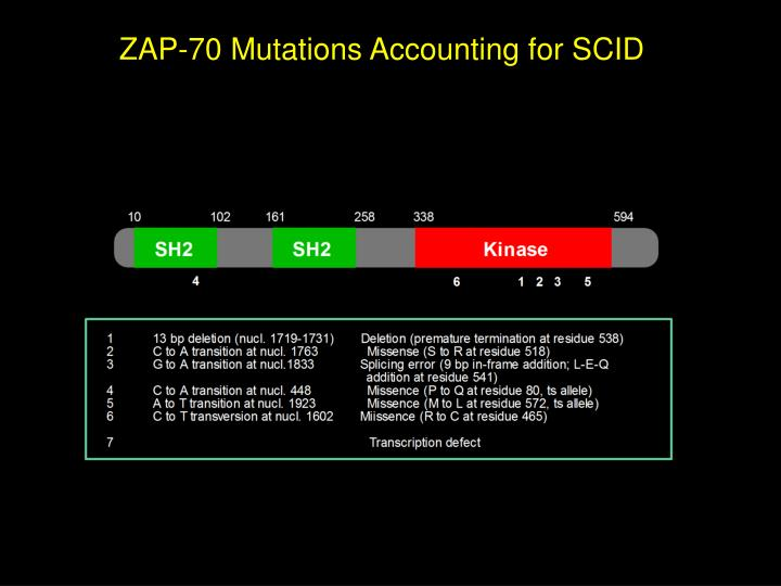 ZAP-70 Mutations Accounting for SCID