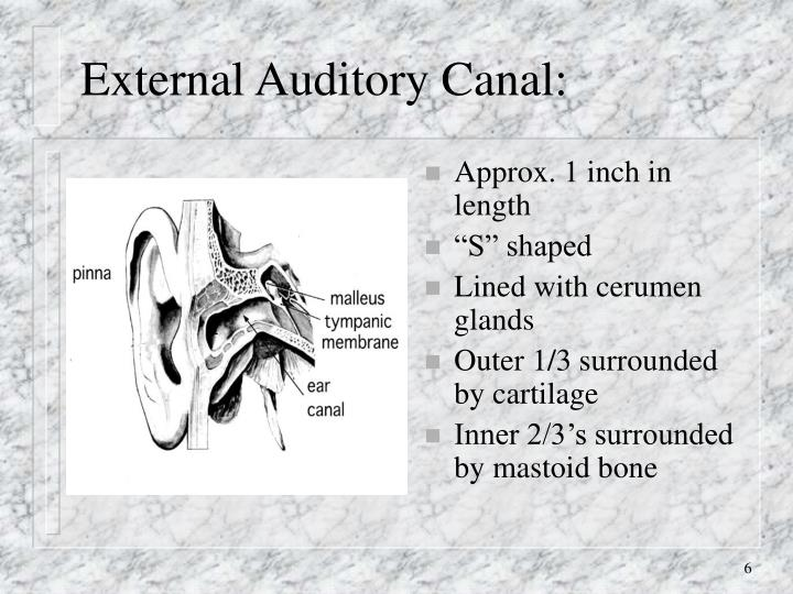 External Auditory Canal: