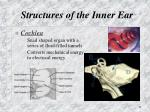 structures of the inner ear