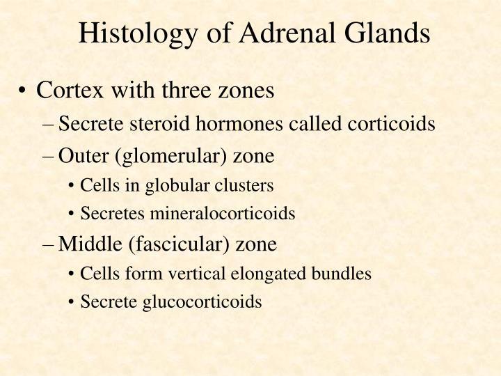 Histology of Adrenal Glands