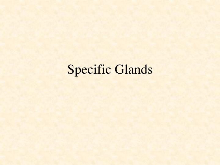 Specific Glands