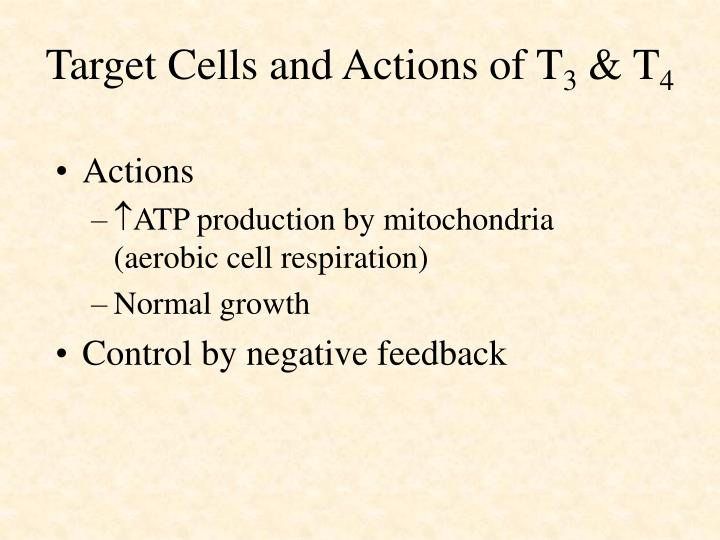 Target Cells and Actions of T