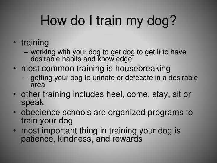 How do I train my dog?
