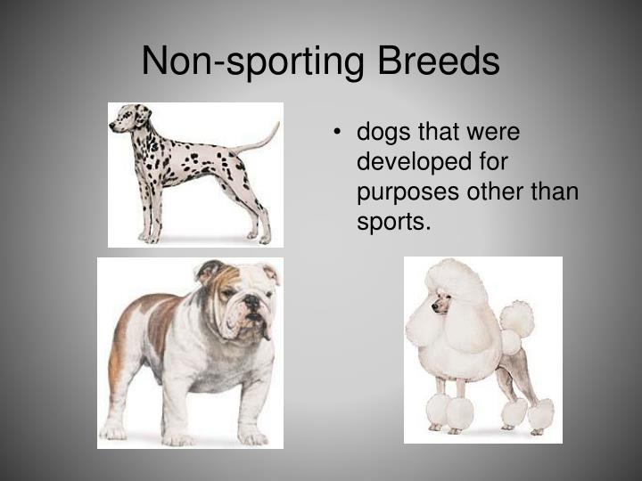 Non-sporting Breeds