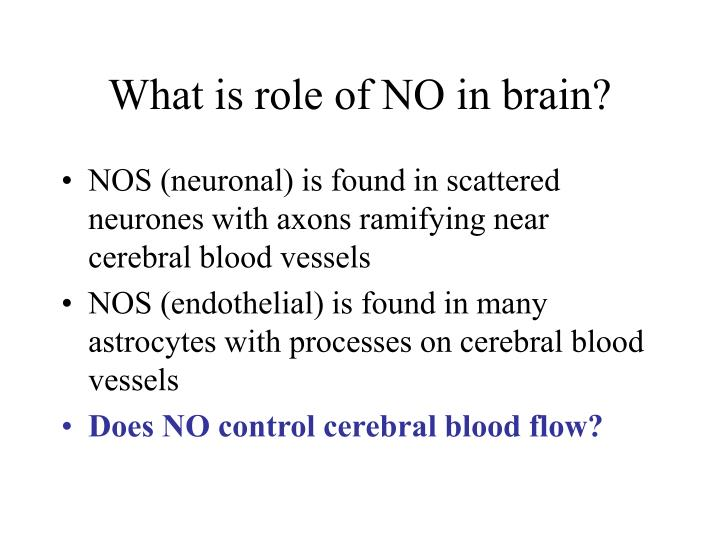 What is role of NO in brain?