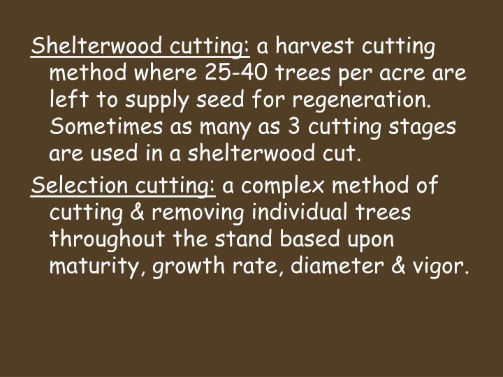 Shelterwood cutting: