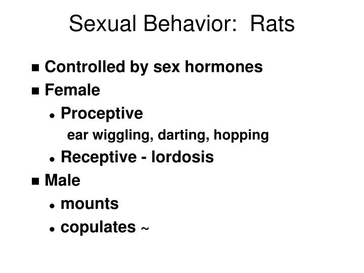 Sexual behavior rats