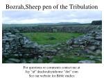 bozrah sheep pen of the tribulation