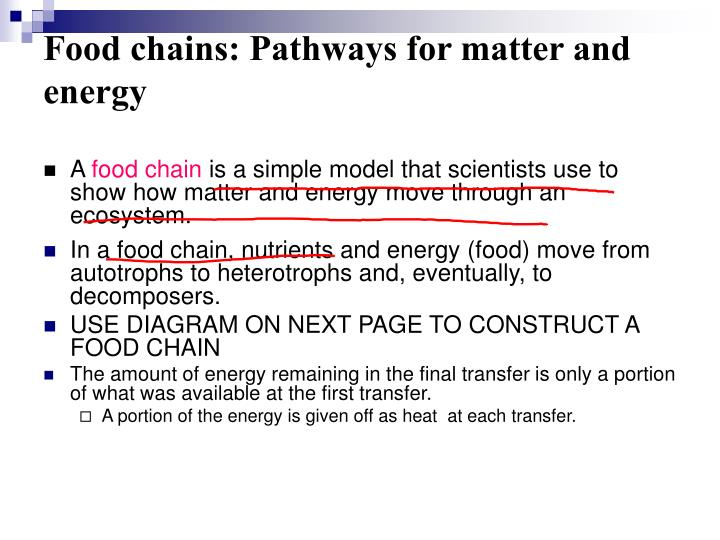 Food chains: Pathways for matter and energy