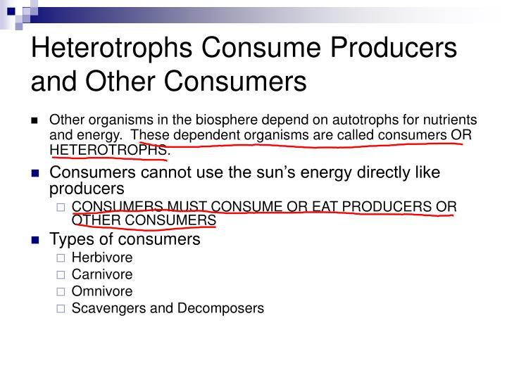Heterotrophs Consume Producers and Other Consumers