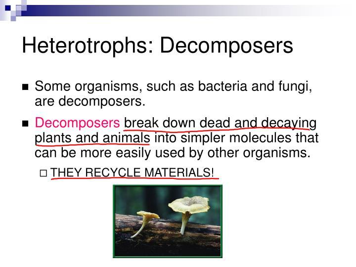 Heterotrophs: Decomposers