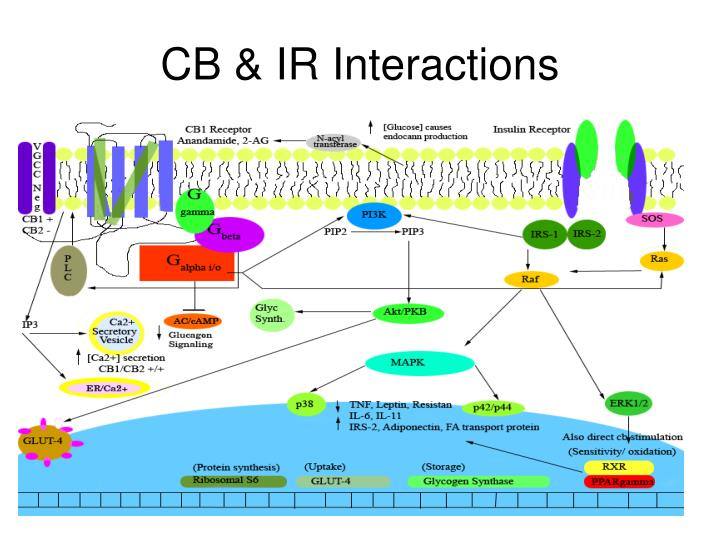 CB & IR Interactions