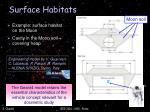surface habitats