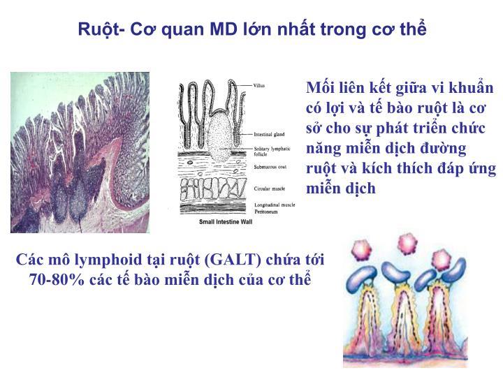 Ruột- Cơ quan MD lớn nhất trong cơ thể