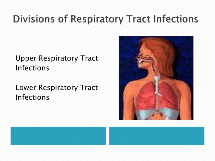 Divisions of Respiratory Tract Infections