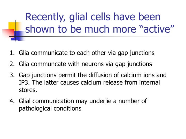 """Recently, glial cells have been shown to be much more """"active"""""""