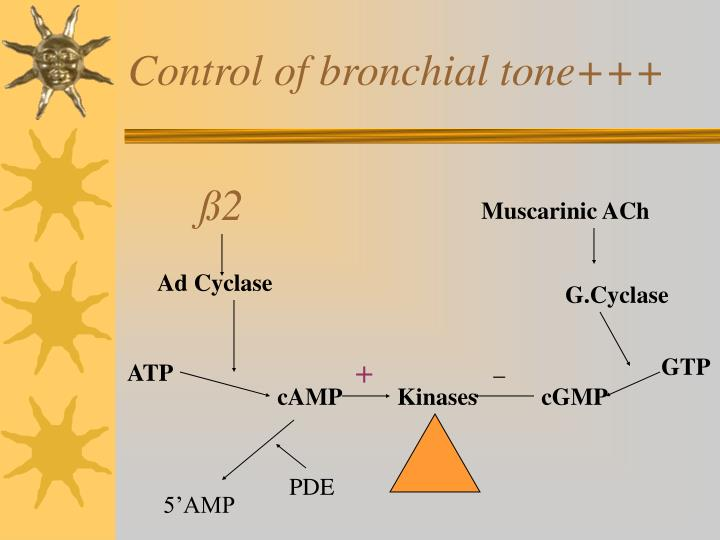 Control of bronchial tone+++